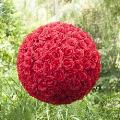 Rental store for 20  Hanging Rose Balls - Red in Shreveport LA